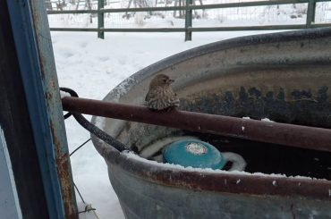 Video with Emotional Impact: Kind Guy Saves a Finch from Freezing!
