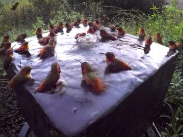 These Hummingbirds In Hot Tube Are Just Like Girls at a Pool Party