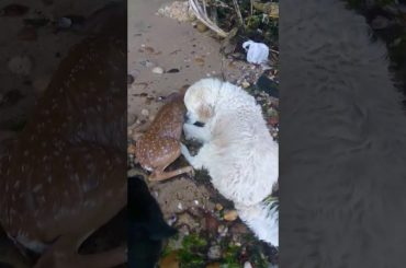 Storm Is Our Hero Today! This Dog Has Saved a Baby Deer From Drowning