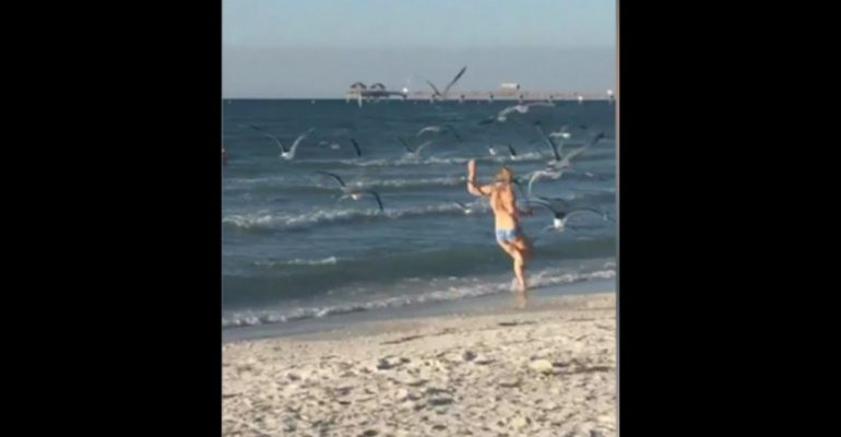Have You Ever Taught How Vicious Seagulls Can Be?