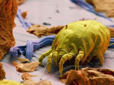 25 Amazing Things Seen Under a Microscope