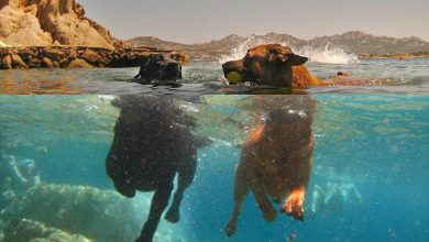 10 Incredible Photos in Split Perspective